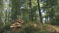 La Société des arbres |