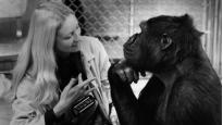 Koko, le gorille qui parle   Barbet Schroeder (Réalisateur)