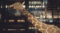 Un animal, des animaux | Nicolas Philibert (Réalisateur)